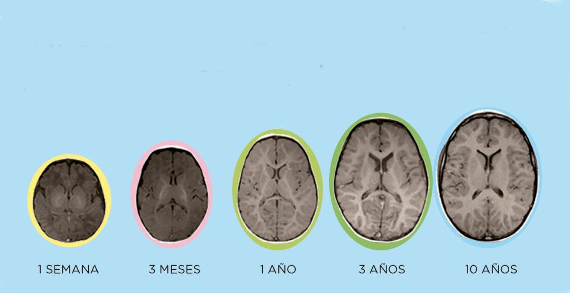 neurociencia en educación infantil